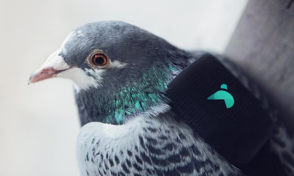 Twitter and Paris' Plume Labs launch pigeons with air pollution sensors over skies of London